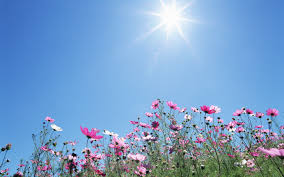 wild flower with sunlight